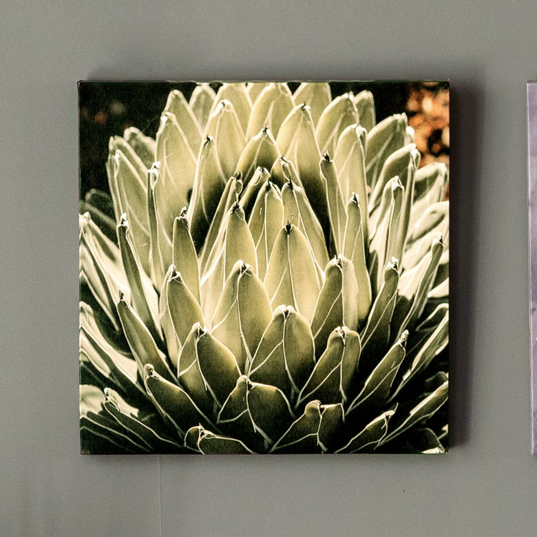 アートパネル アガベ 花 フラワー 植物 写真 アートフレーム 約30cm×30cm [66942]【 アートポスター キャンバスアート 壁飾り 壁掛け おしゃれ リゾート モダン アジアン雑貨 アジア アジアンリゾート ボタニカル】