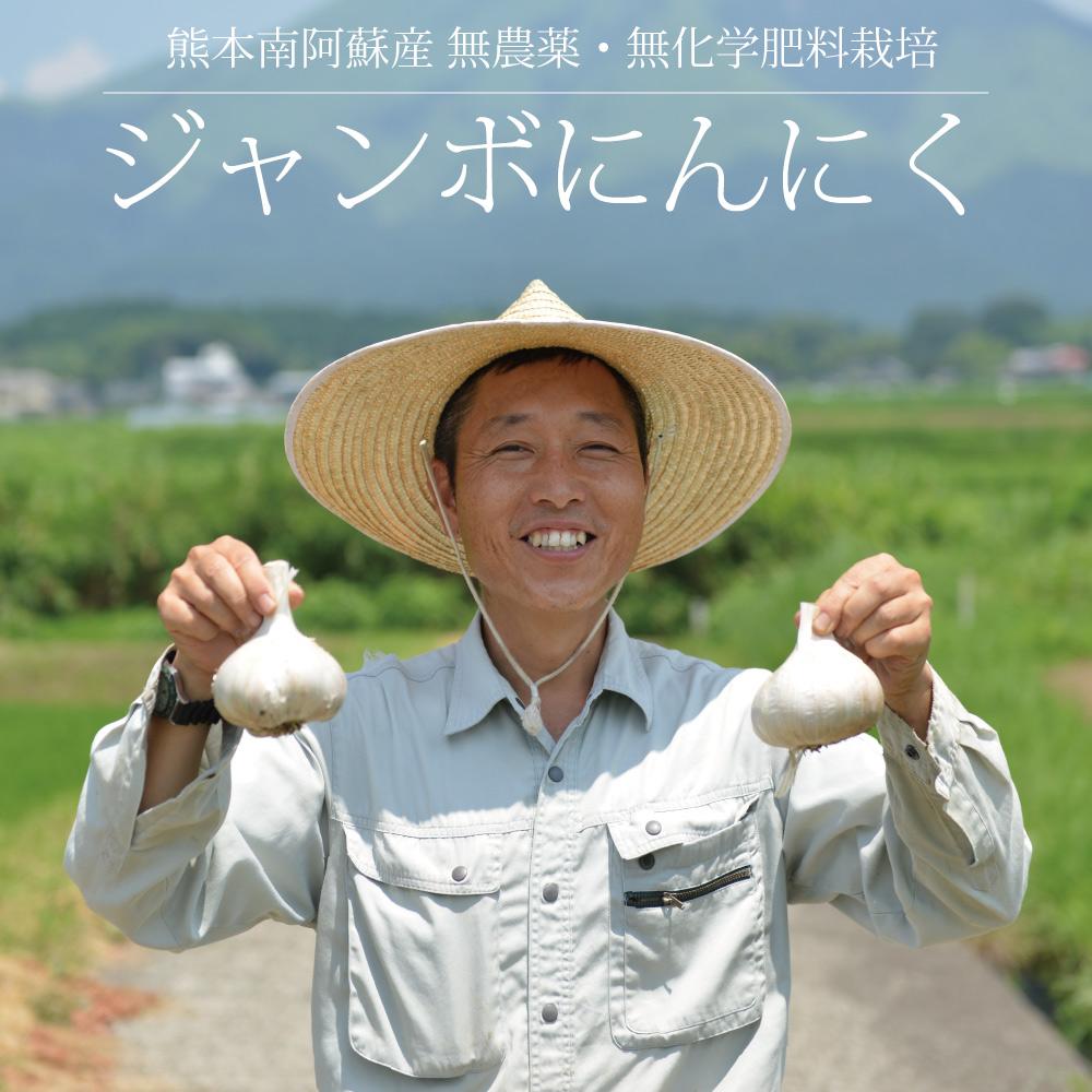 藤本浩二さんのジャンボにんにく 500g / 無農薬・無化学肥料栽培 / 熊本阿蘇産 / 国産 /