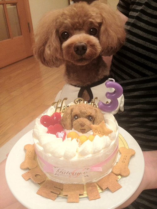 Atelier Waf ワンコケーキ Fruit Decorated Cake S Cake Dog Cake
