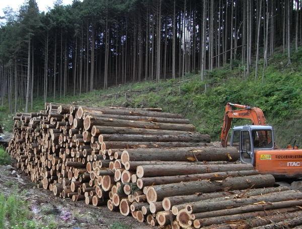スギとサワラの混合★樹皮あり★レギュラーサイズナチュラルウッドチップ 100リットル