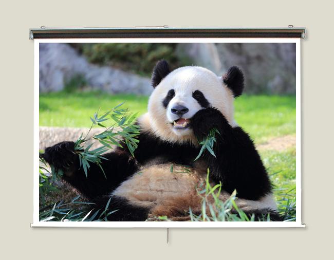 プロジェクタースクリーン110インチ (16:9)ロールタイプ チェーン巻き上げ式2.2倍明るいトップクラスのガラスビーズを使用したマイクロビーズスクリーン日本製