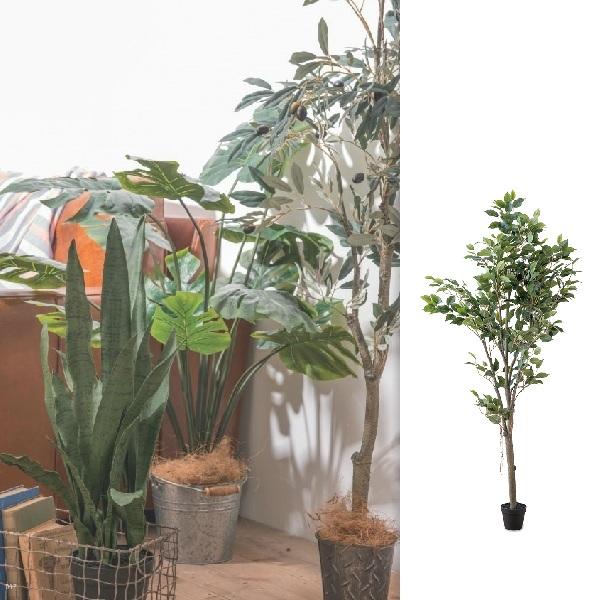 ◆法人様限定販売【メーカー直送】人工観葉植物 フェイクグリーンフィカスツリー  po-80955