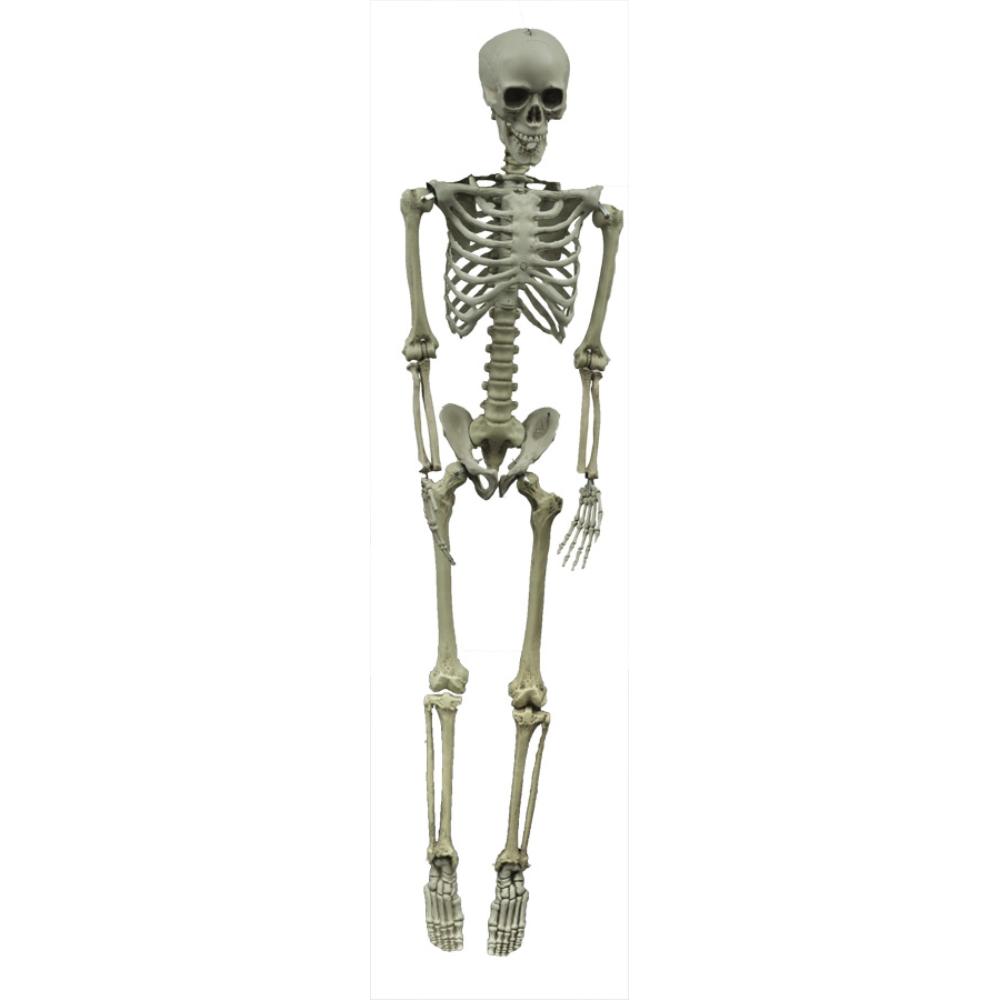 骸骨 約152センチ 約152センチ ハンギング スケルトン ハンギング スケルトン, 内田印房:58079c26 --- officewill.xsrv.jp