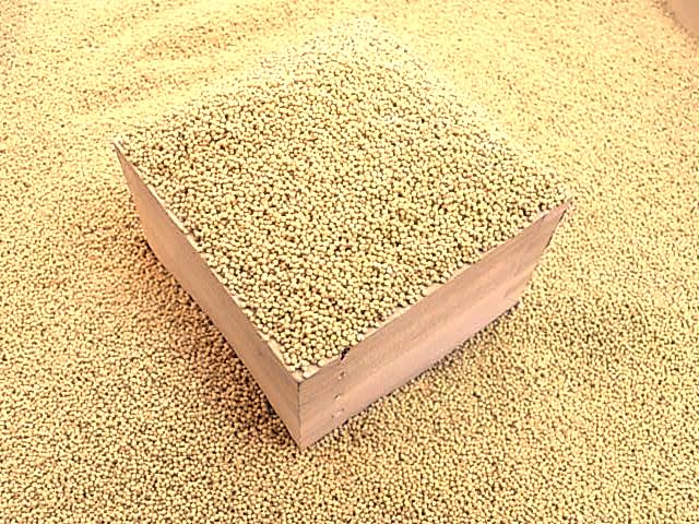 もちあわ 5kg 国産 送料無料 雑穀 雑穀米 食物繊維 無農薬 国産 もちあわ 穀物 健康 美容 栄養 上品 健康食品 北海道産 送料無料 もちもち 食感 鉄分 上質 食べやすい 北海道 食べ物 食品