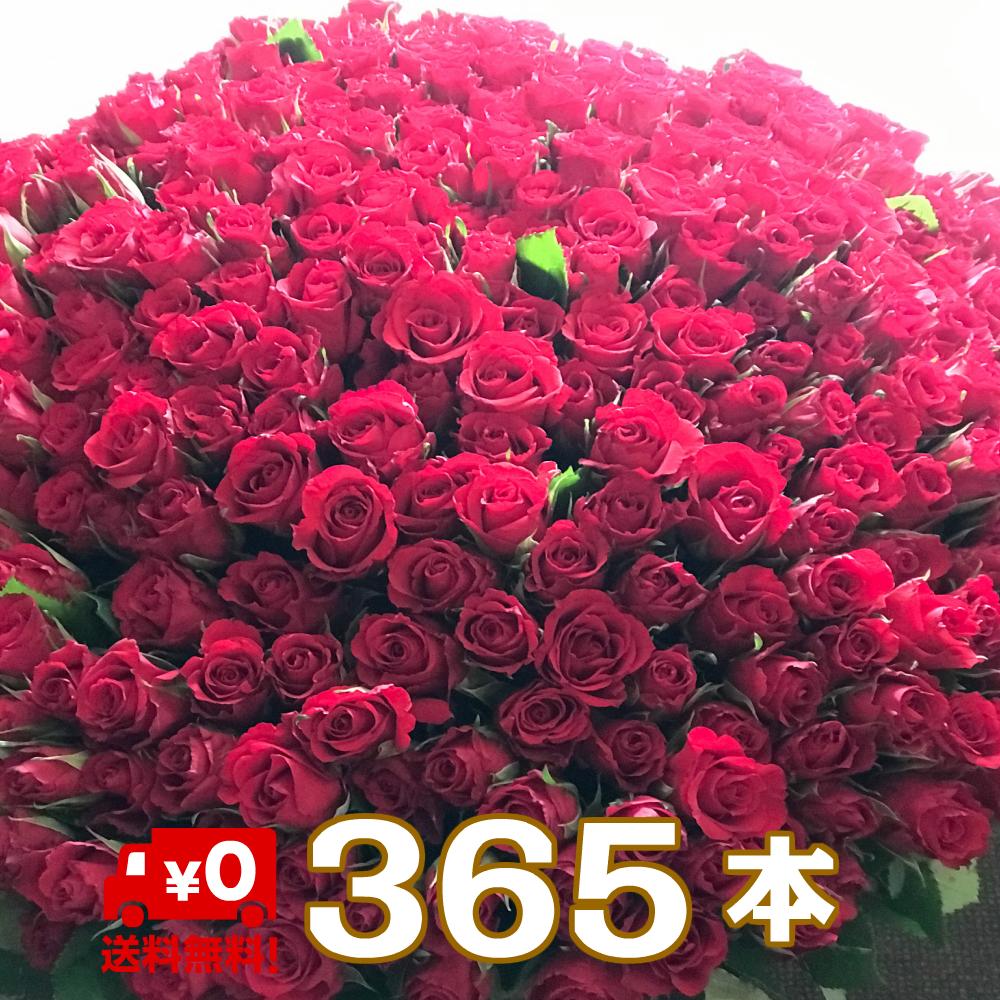 """【送料無料】サプライズ バラ花束 365本 無料のメッセージカード付き花言葉は""""毎日君が恋しい""""相手を気遣うプレゼントに 記念日 ギフト 誕生日 薔薇 ローズ 発表会 生花"""