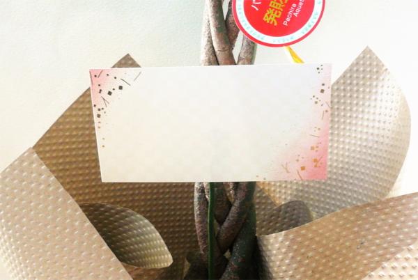 観葉植物パキラ7号【開店祝い】【新築祝い】【誕生日】【退職祝い】