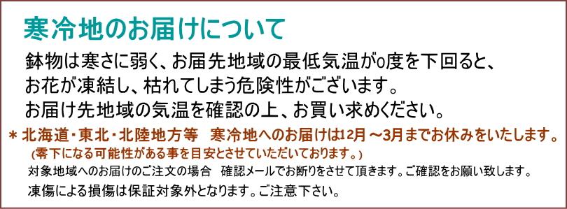 観葉植物パキラ7号【開店祝い】【新築祝い】【誕生日】【退職祝い】【御祝い】