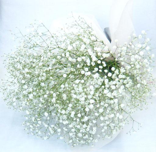 誕生日 正規店 結婚祝い お悔みにも かすみ草 かすみそうの花束 高級 カスミソウ