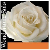 Pirastro ピラストロ / Wondertone Solo ワンダートーン ソロ バイオリン弦 E線アドヴァンスドスチール 4/4サイズ用Set弦【smtb-tk】
