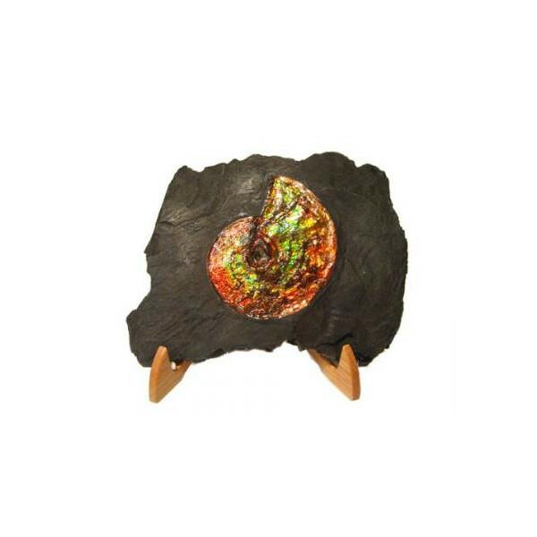 カナディアン アンモライト 原石 ジェムストーン トップグレード (30-725)