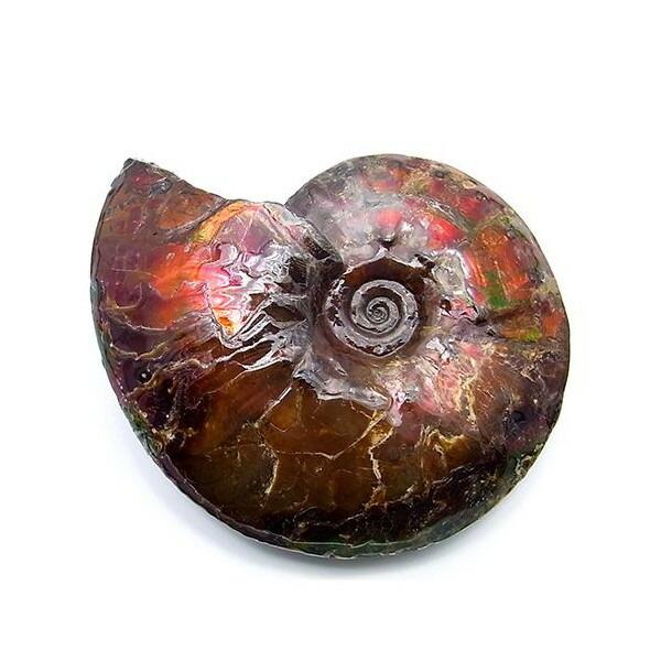 カナディアン アンモライト 原石 ジェムストーン ハイグレード (39-769)