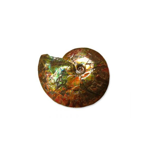 カナディアン ジェムストーン アンモライト 原石 原石 ジェムストーン トップグレード トップグレード (82-696), 有明町:8c92a06c --- sunward.msk.ru