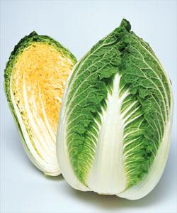 白菜種子 タキイ種苗 黄ごころ90 ペレット5000粒 黄芯秋冬どり白菜