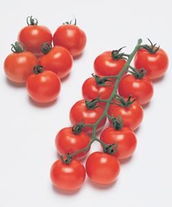 中玉トマト種子 タキイ種苗 フルティカ 1000粒