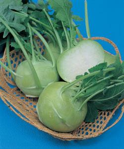 メール便での配送可能 公式 料理の幅が広がるコールラビ 球形に肥大した茎を食べる コールラビ種子 新作アイテム毎日更新 20ml グランデューク タキイ種苗