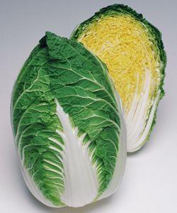 白菜種子 タキイ種苗 晴黄65 ペレット5000粒
