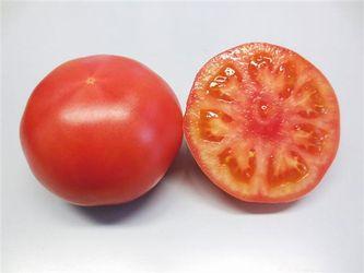 トマト種子 トキタ種苗 豊作祈願(ほうさくきがん)1103 1000粒