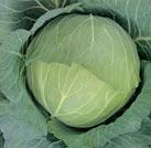 キャベツ種子 カネコ種苗 いろどり 野菜の種 Lコート種子5000粒
