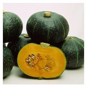 かぼちゃ種子 みかど協和 味平 500粒