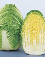 白菜種子 サカタのタネ 冬月90 ペレット5000粒