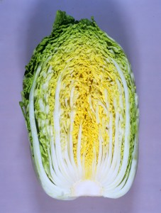 白菜種子 カネコ種苗 黄望峰90 コート5000粒