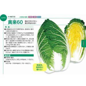 白菜種子 トーホク 黄楽60 コート5000粒