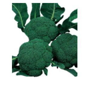 ブロッコリー種子 サカタのタネ こんにちは 2000粒