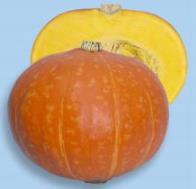 かぼちゃ種子 渡辺採種場 紅爵(こうしゃく) 500粒