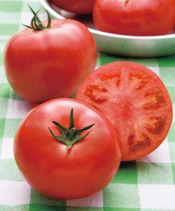 トマト種子 タキイ種苗 桃太郎ピース 1000粒