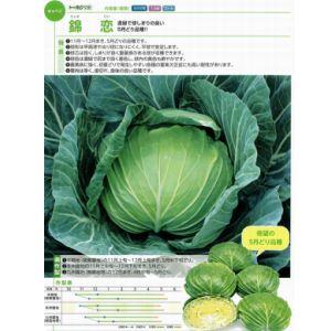 キャベツ種子 トーホク 錦恋 (にしきごい) コート5000粒