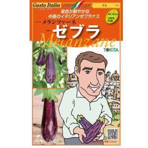 紫色が鮮やかな中長イタリアンゼブラナス 公式ショップ イタリア野菜種子 購買 トキタ種苗 ゼブラ 100粒 メランツァーネ