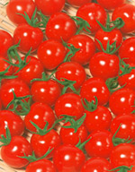 ミニトマト種子 サカタのタネ キャロル10 1000粒