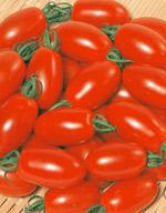 ミニトマト種子 サカタのタネ アイコ 1000粒