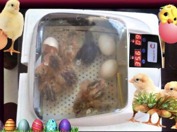 孵卵器 ふ卵器 孵化器 PSE認証 インキュベーター全自動 新品