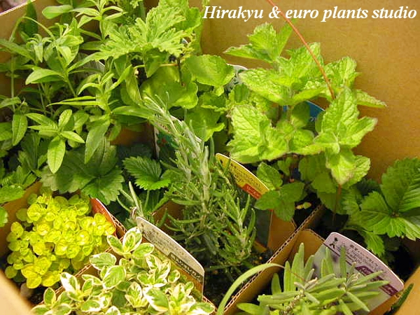 how to keep herbs fresh at farmers market