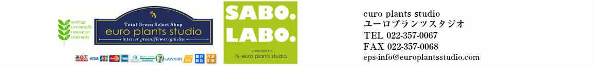 euro plants studio:楽天市場10年目!こだわり植物工房 ユーロプランツスタジオ