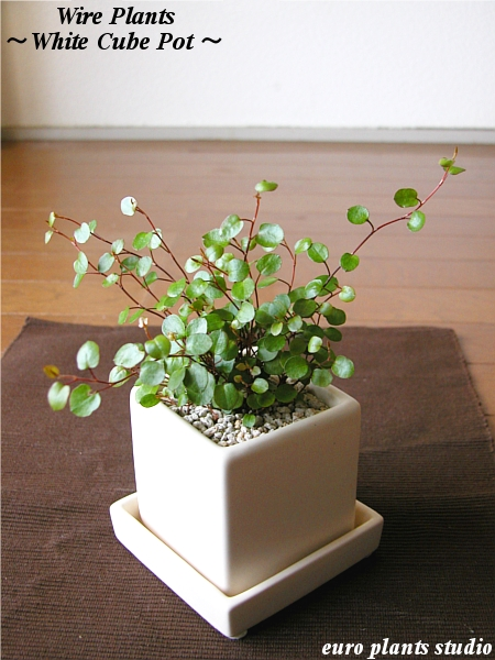 Wire Plants White Cube Pot Interior Ornamental Gift Memorial Day Birthday