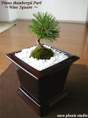 auc-eps | Rakuten Global Market: -Black pine and natural mountain ...
