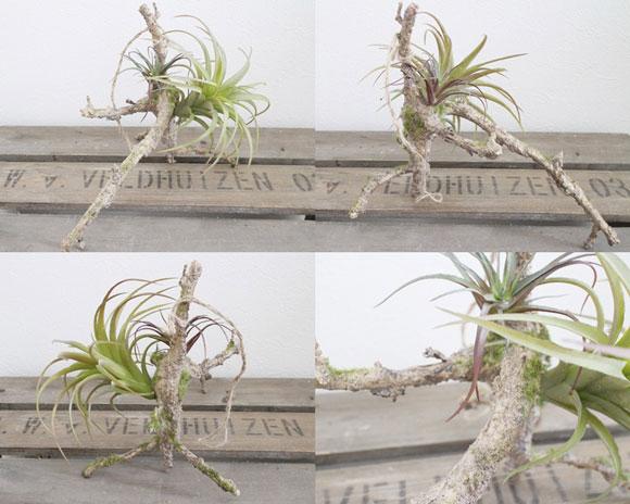I present parent and child tillandsia ☆ houseplant fake greenery on