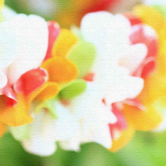 うみカメラマン むらいさち ファブリックパネル 花 アートパネル Sachi Murai XLサイズ 100cm×100cm lib-4122324s9 北欧 送料無料 クーポン プレゼント 通販 NP 後払い 新生活 オススメ %off ジェンコ 北欧 モダン インテリア ナチュラル テイスト 雑貨