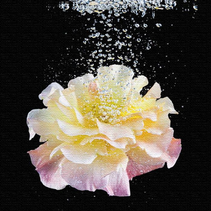 花 アートパネル FLOWER XLサイズ 100cm×100cm lib-4122472s4 北欧 送料無料 クーポン プレゼント 通販 NP 後払い 新生活 オススメ %off ジェンコ 北欧 モダン インテリア ナチュラル テイスト 雑貨