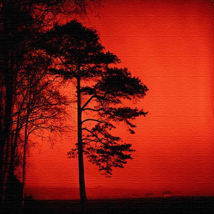 木 シルエット アートパネル SILHOUETTE XLサイズ 100cm×100cm lib-4122474s4送料無料 北欧 モダン 家具 インテリア ナチュラル テイスト 新生活 オススメ おしゃれ 後払い 雑貨
