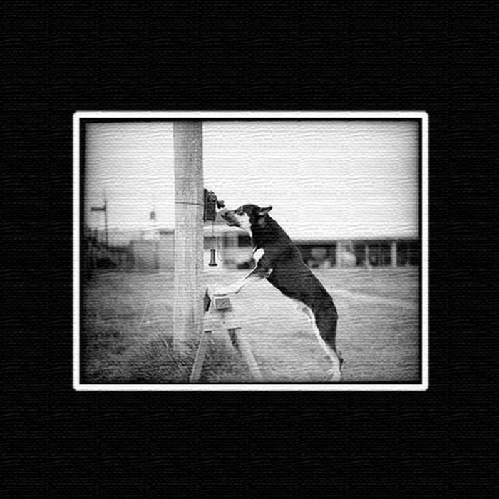 犬 アートパネル ANIMAL XLサイズ 100cm×100cm lib-4122822s4 北欧 送料無料 クーポン プレゼント 通販 NP 後払い 新生活 オススメ %off ジェンコ 北欧 モダン インテリア ナチュラル テイスト 雑貨