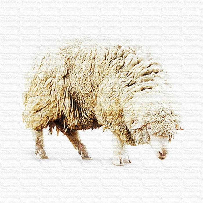 羊 アートパネル ANIMAL XLサイズ 100cm×100cm lib-4122823s4 北欧 送料無料 クーポン プレゼント 通販 NP 後払い 新生活 オススメ %off ジェンコ 北欧 モダン インテリア ナチュラル テイスト 雑貨