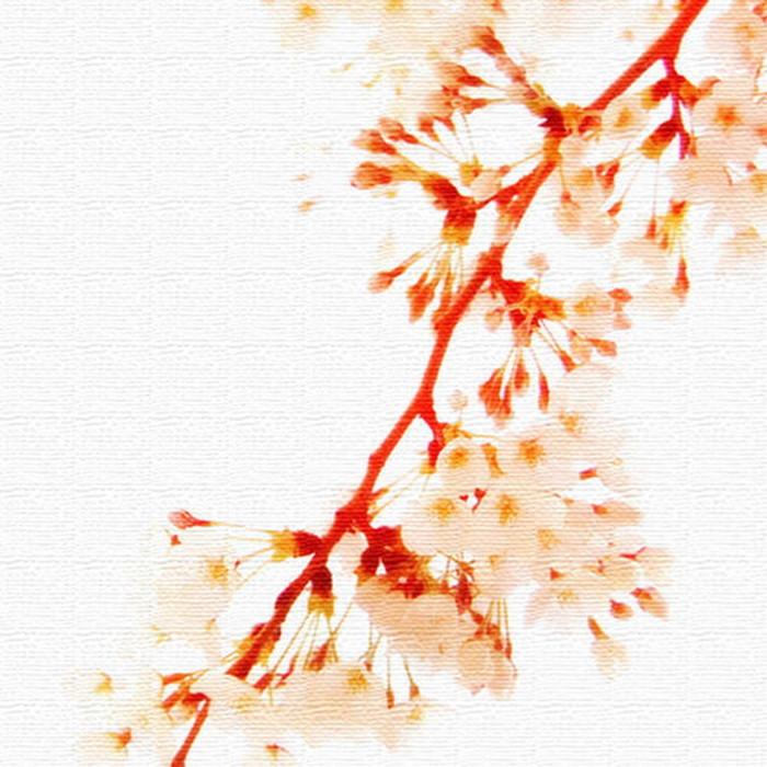 桜 アートパネル FLOWER XLサイズ 100cm×100cm lib-4122824s4 北欧 送料無料 クーポン プレゼント 通販 NP 後払い 新生活 オススメ %off ジェンコ 北欧 モダン インテリア ナチュラル テイスト 雑貨