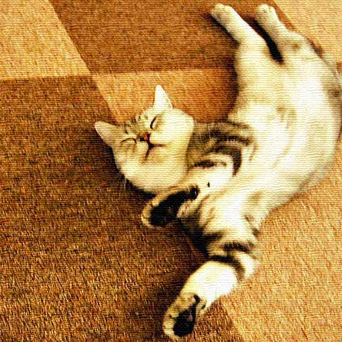 猫 アートパネル ANIMAL XLサイズ 100cm×100cm lib-4122828s4 北欧 送料無料 クーポン プレゼント 通販 NP 後払い 新生活 オススメ %off ジェンコ 北欧 モダン インテリア ナチュラル テイスト 雑貨