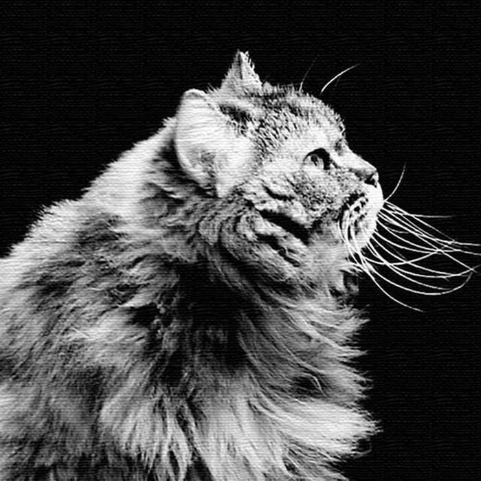 猫 アートパネル ANIMAL XLサイズ 100cm×100cm lib-4122834s4送料無料 北欧 モダン 家具 インテリア ナチュラル テイスト 新生活 オススメ おしゃれ 後払い 雑貨