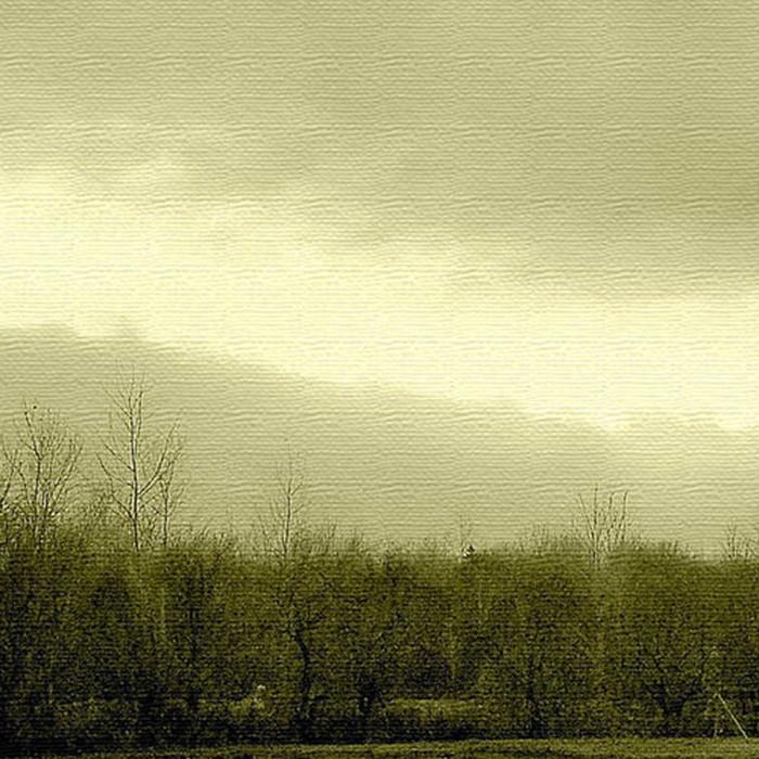 森 写真 インテリアパネル アートパネル PHOTO XLサイズ 100cm×100cm lib-4122852s4 北欧 送料無料 クーポン プレゼント 通販 NP 後払い 新生活 オススメ %off ジェンコ 北欧 モダン インテリア ナチュラル テイスト 雑貨