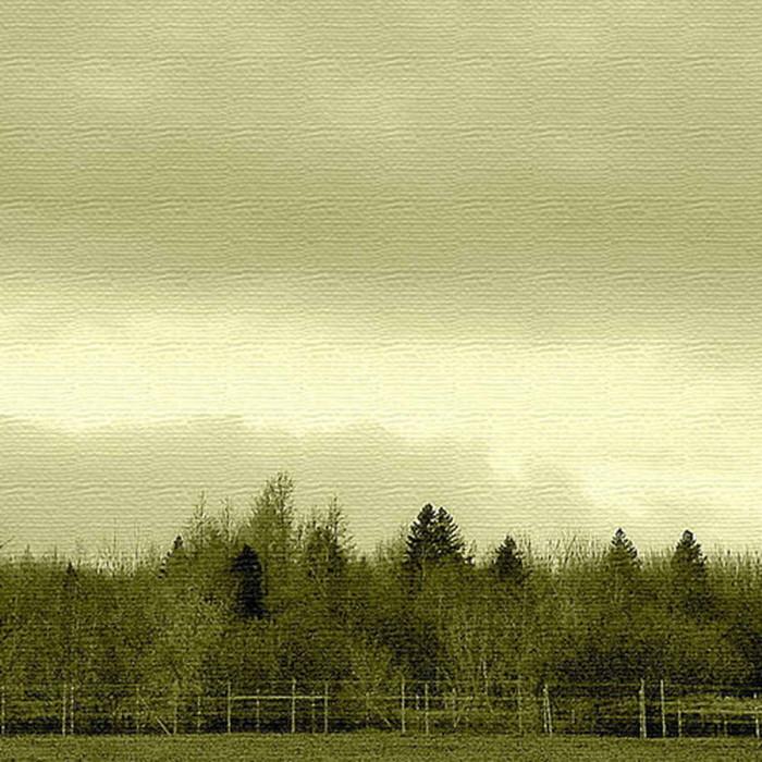 森 写真 ファブリックパネル アートパネル PHOTO XLサイズ 100cm×100cm lib-4122853s4 北欧 送料無料 クーポン プレゼント 通販 NP 後払い 新生活 オススメ %off ジェンコ 北欧 モダン インテリア ナチュラル テイスト 雑貨