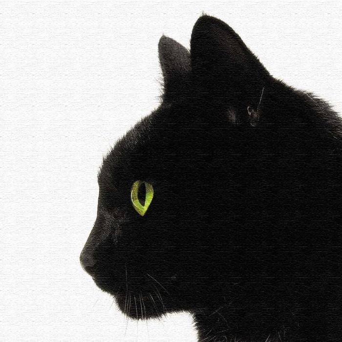 黒猫 アートボード アートパネル アートデリ XLサイズ 100cm×100cm lib-5109079s4 北欧 送料無料 クーポン プレゼント 通販 NP 後払い 新生活 オススメ %off ジェンコ 北欧 モダン インテリア ナチュラル テイスト 雑貨